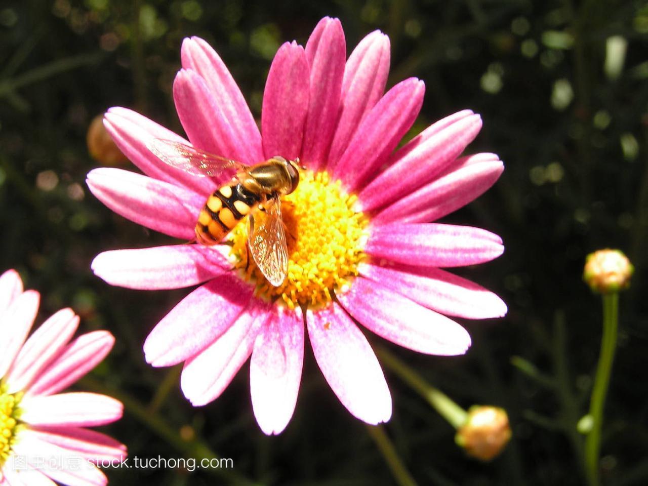 动物,animal,卡通,insect,昆虫,flower,花卉,plant,脑袋像下的狮子植物图图片