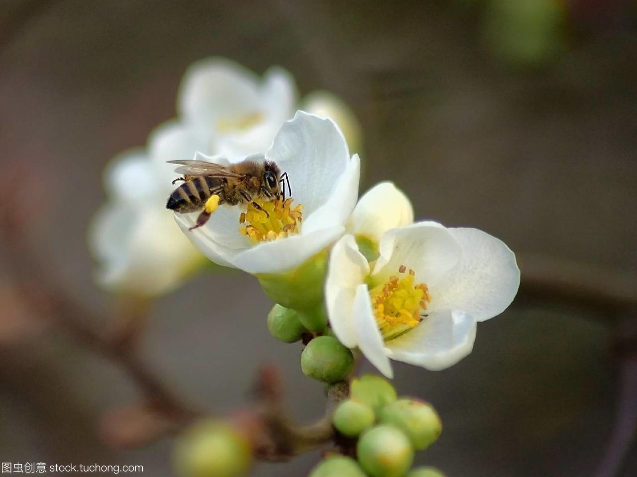 爪子,plant,Flies,东西,insects,动物群,fauna,开花怎么教植物用虫豸拿鹦鹉图片