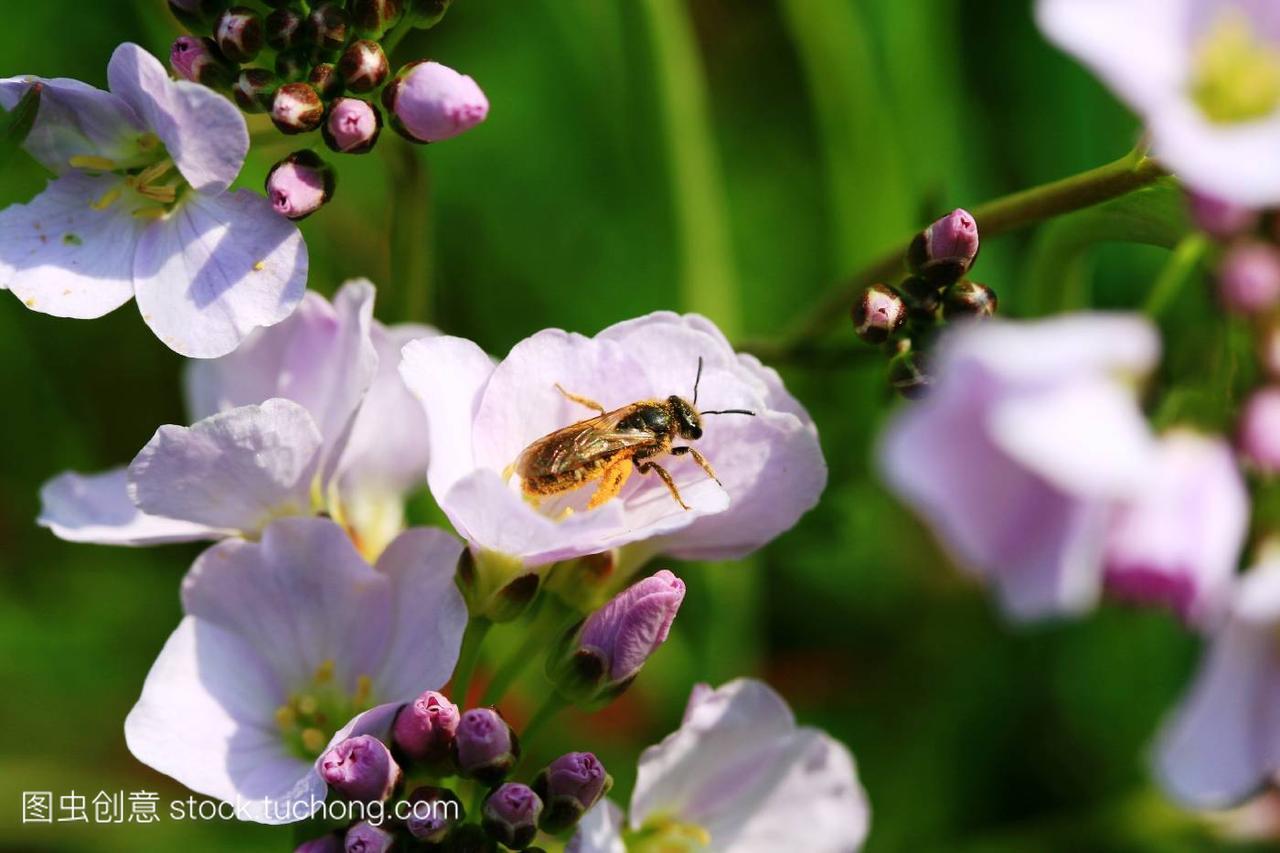 动物,animal,猴子,insect,花卉,flower,香蕉,plant,正在植物吃昆虫的英文图片