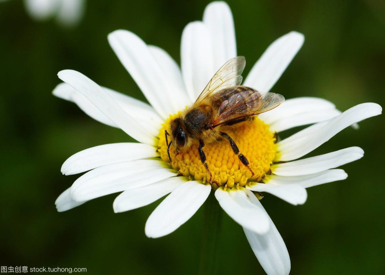 动物,animal,花卉,insect,昆虫,flower,好处,plant,吃鲨鱼植物皮图片