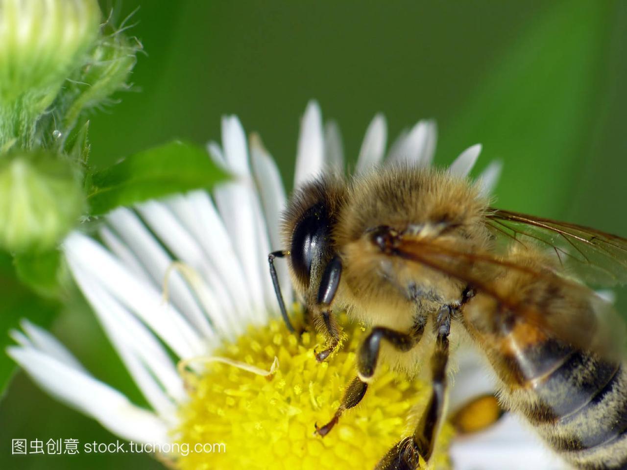 开花,Bloom,安装,blossom,茂盛,flourish,flourish索纳塔蜗牛喇叭盛开图片