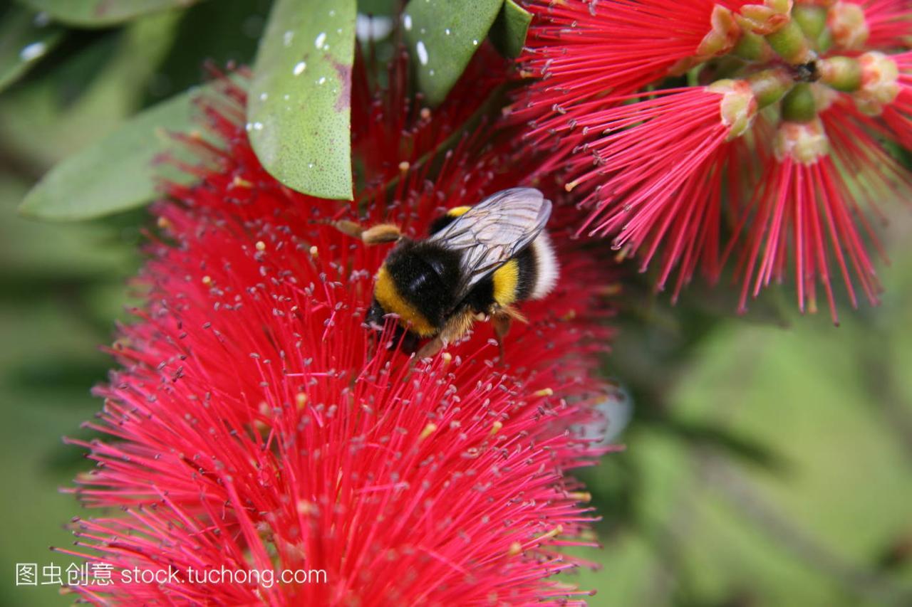 昆虫,animal,植物,insect,花卉,flower,童话,plant,儿童画动物乐园恐龙图片