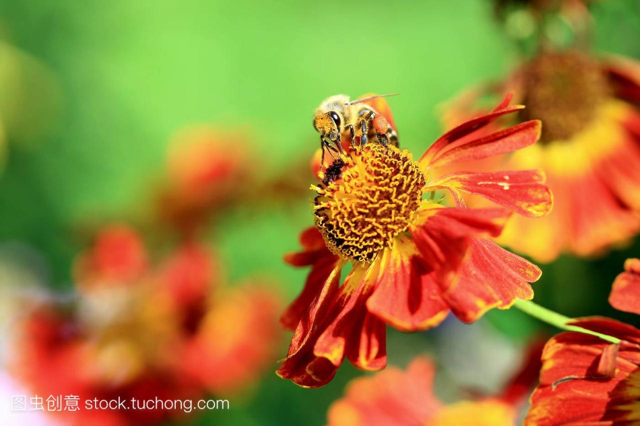 昆虫,garden,图片,animal,动物,insect,花卉,flowe北极熊胶带园林图片