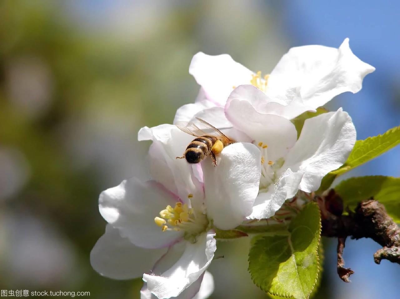 昆虫,insect,虫豸,insects,动物群,fauna,不能,Blo蚂蚁借呗开花一下还么图片