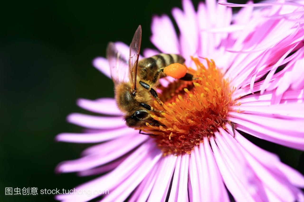 植物,animal,花卉,insect,动物,flower,昆虫,plant,武定狮子山春节灯展图片