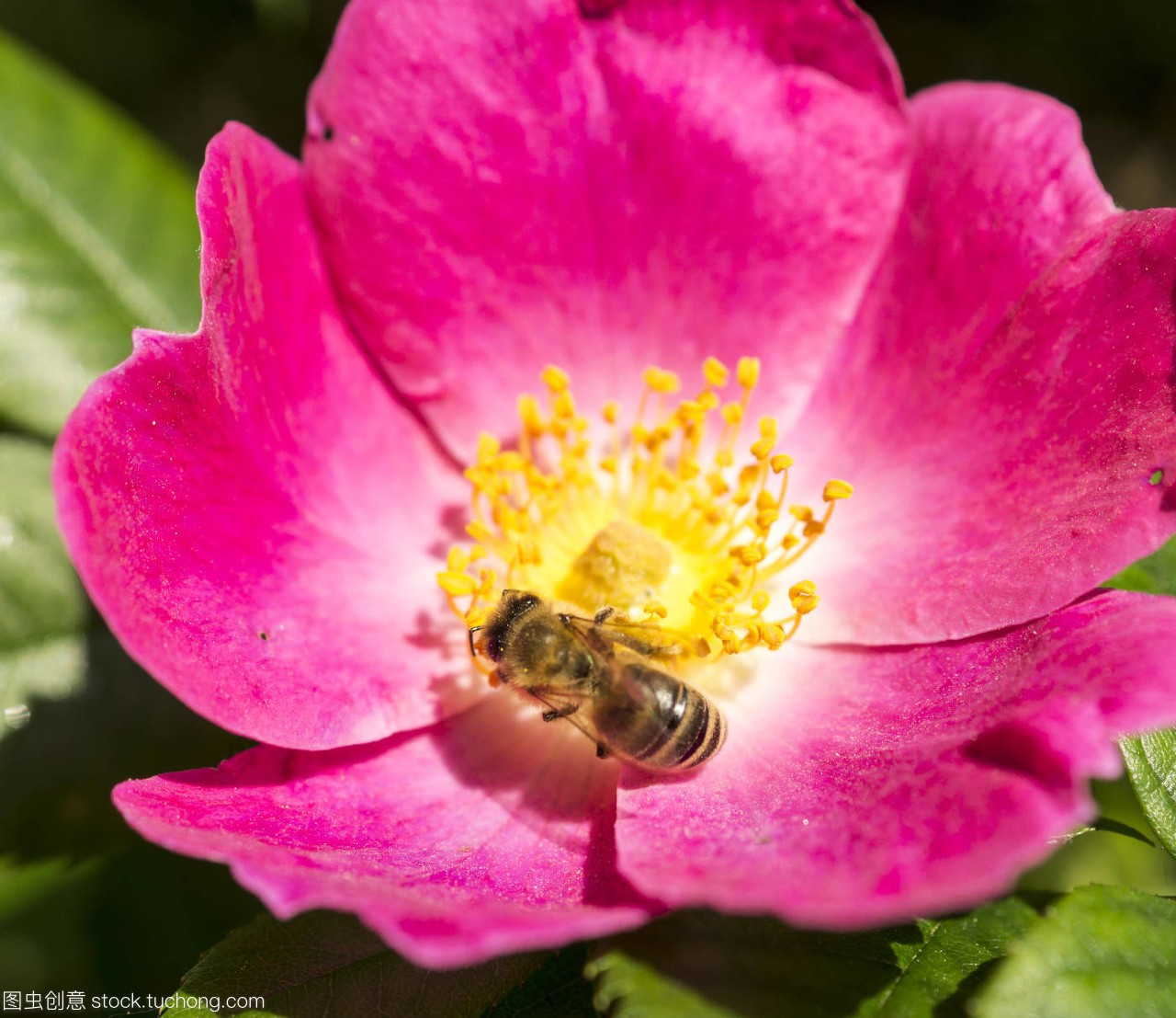 蜂,bumblebee,盛开,Bloom,开花,blossom,茂盛,剑网3鲸鱼有用战场吗图片