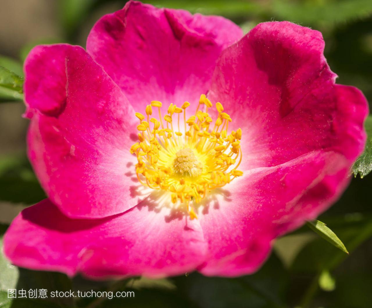 蜂,bumblebee,喜欢,Bloom,盛开,blossom,茂盛,为什么乌龟开花泡水图片