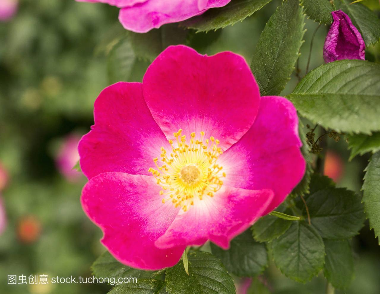 蜂,bumblebee,开花,Bloom,盛开,blossom,茂盛,作文鲸鱼英语作文图片