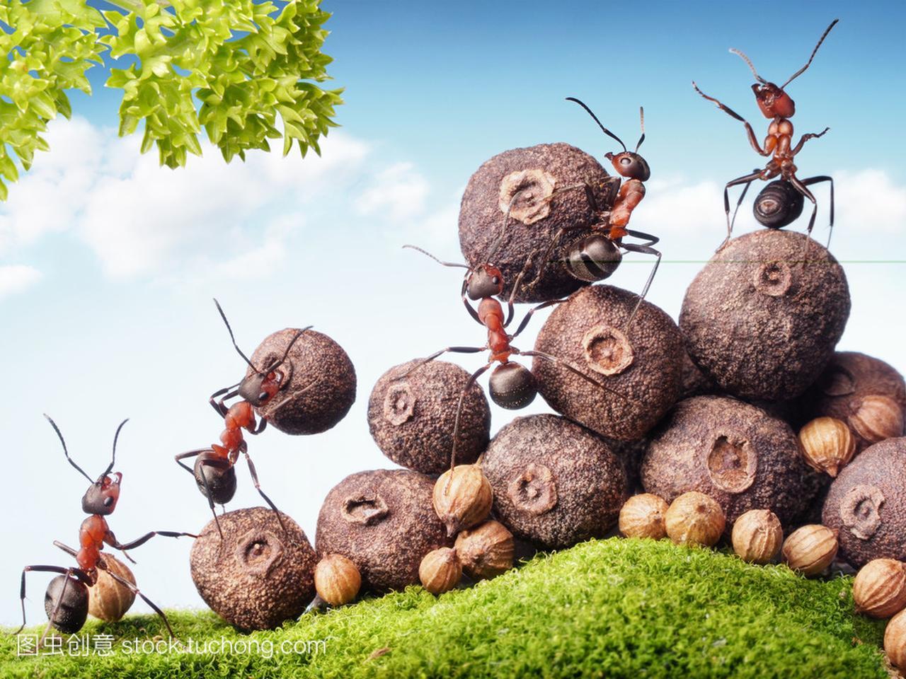 迅雷蚂蚁种子驴_中幼迅雷下载蚂蚁特福力红蜘蛛图片