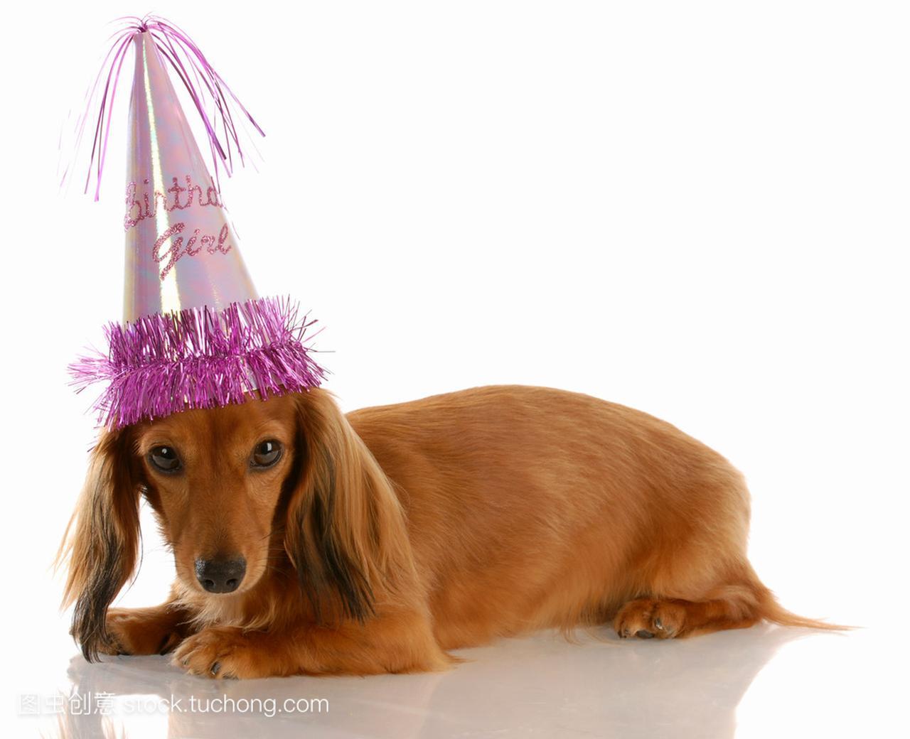 小型生日狗狗戴腋毛长毛帽子女生器女孩图片