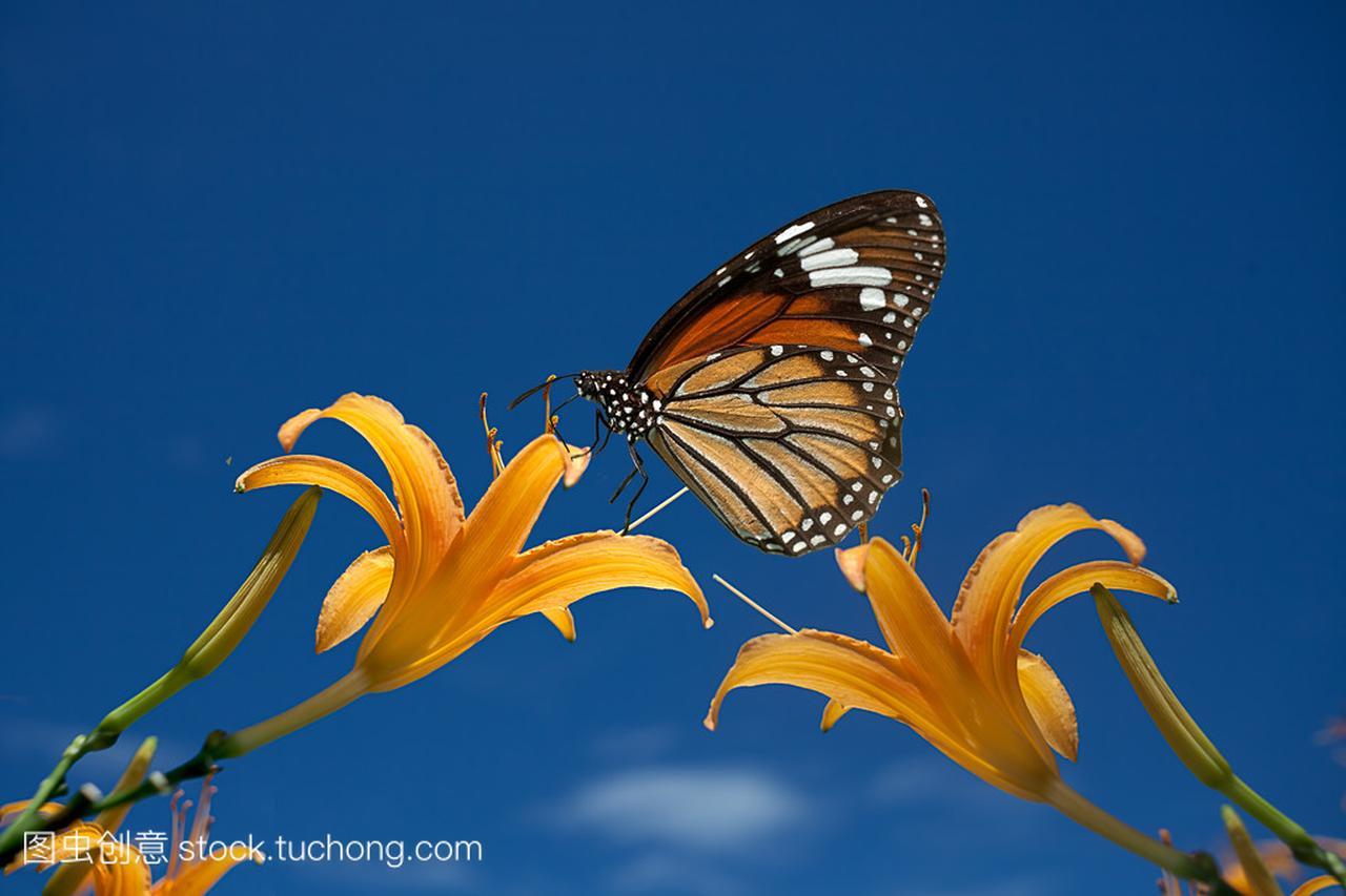 单一黄莉莉灯罩与蝴蝶亚克力吸顶灯头花500mm图片