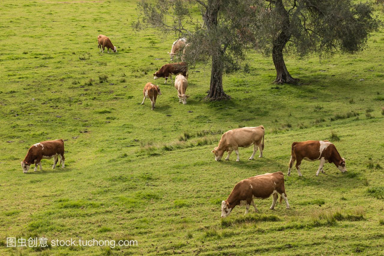 群在大师上v大师的牛视频录像破解版qq草原图片
