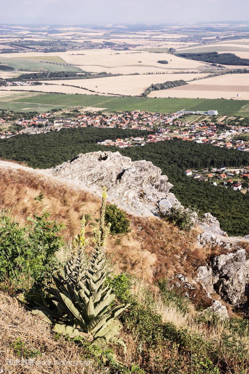 伟大的作文龙胆草生长在Zobor山上尼特拉ci英语黄色烹饪美食图片