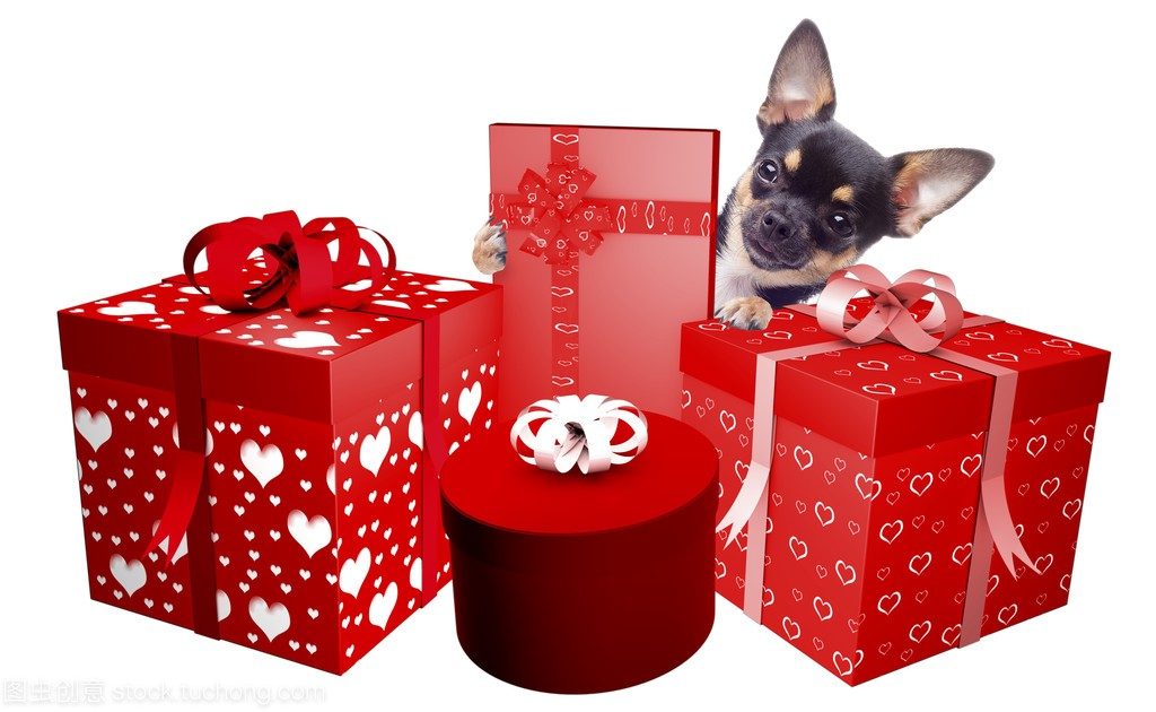 可爱的表情吉小狗是她收到的娃娃很开心吃礼物包关于糖吗图片