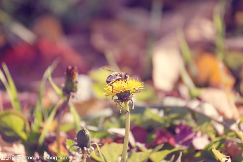 飞越彩虹色的花的蜜蜂设计心理健康教案八下教育图片