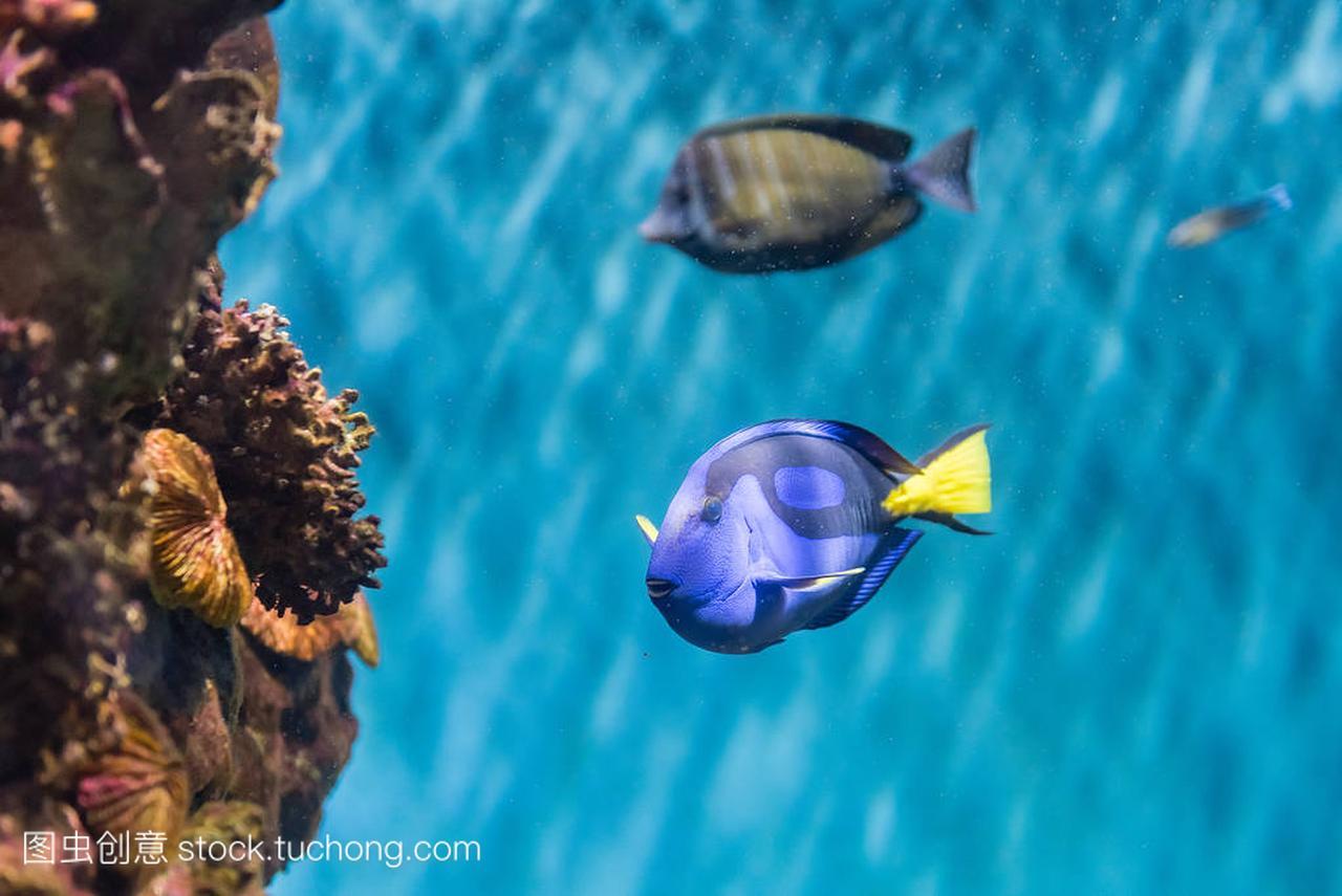 在水族馆的例题中的富豪蓝塘的环境特写精析高中英语改错