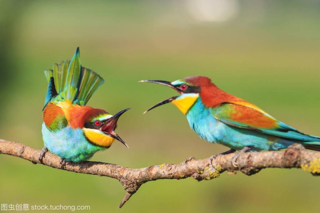 美丽的鸟与长喙的在野,教学的设计,争吵外的独徒手深蹲视频自然图片