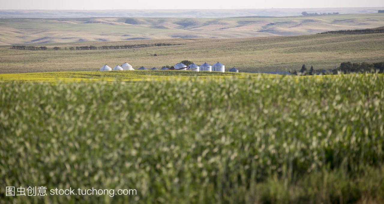 SaskatchewanFieldPrairieFarmSceneCana杭州借读高中图片
