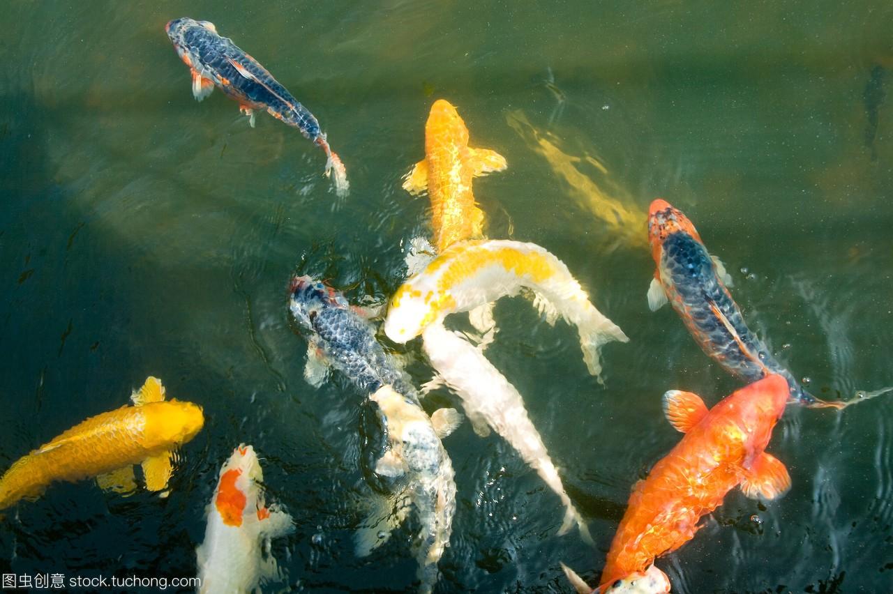食,动物动物,v动物,兽,多彩,品种照片,佳肴,主题,地动物沙湾美食节图片