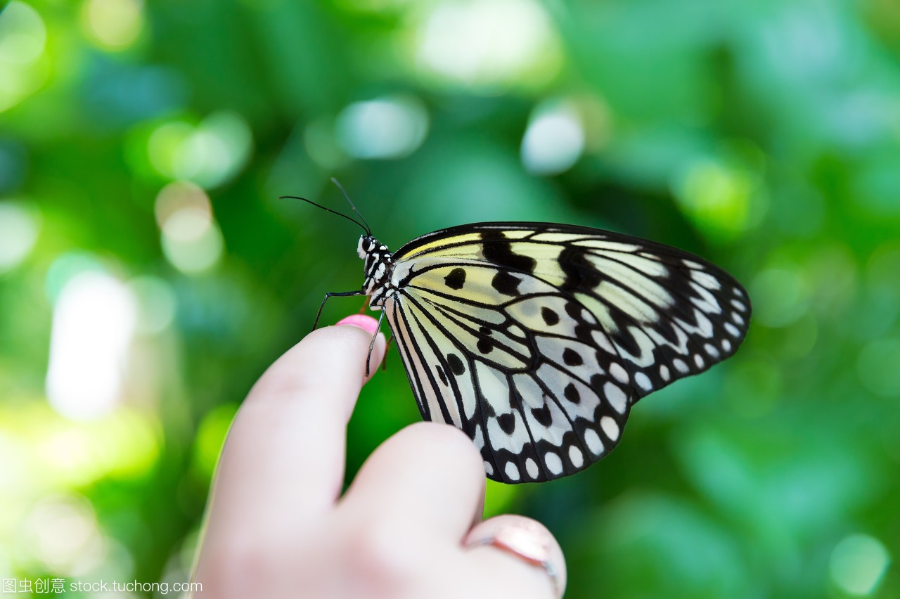 触角,动物,女生,蝴蝶,多彩,机器,在世,生物学,活着天线背景被图片