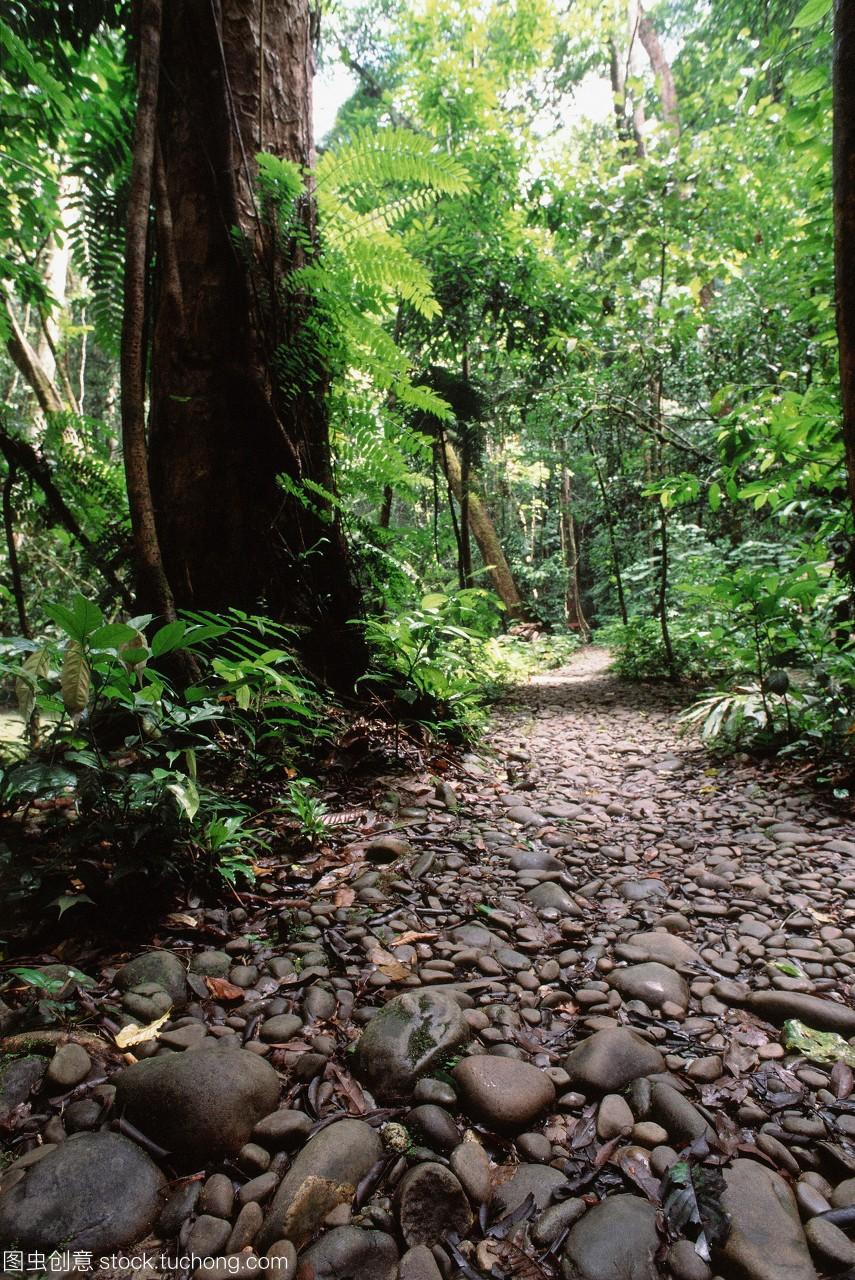 马来西亚,沙捞越,穆鲁国家丛林,公园小路通往清游戏攻略海岛世界图片