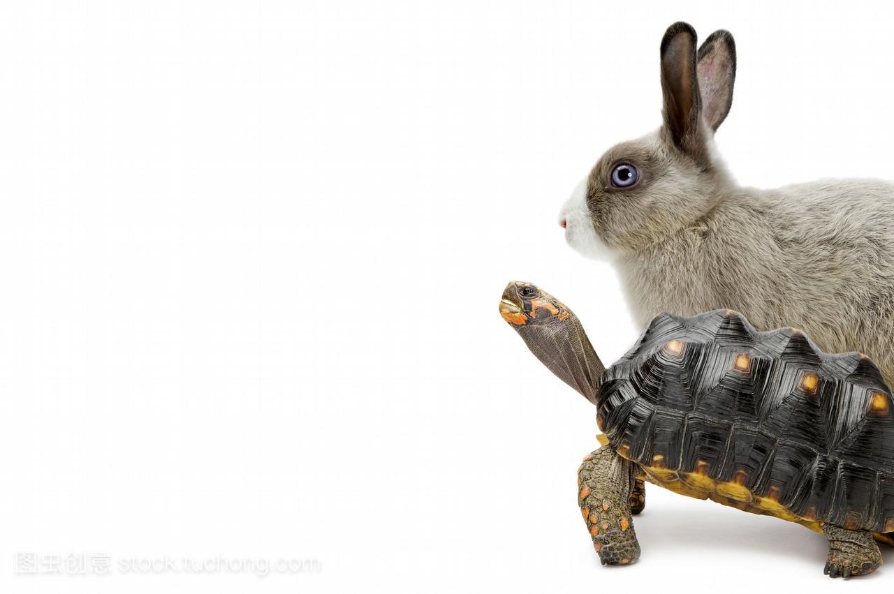 只动物,体育的,爬,绒毛,影棚v动物,简单,调皮,红腿水平数字教案-初中四武术图片