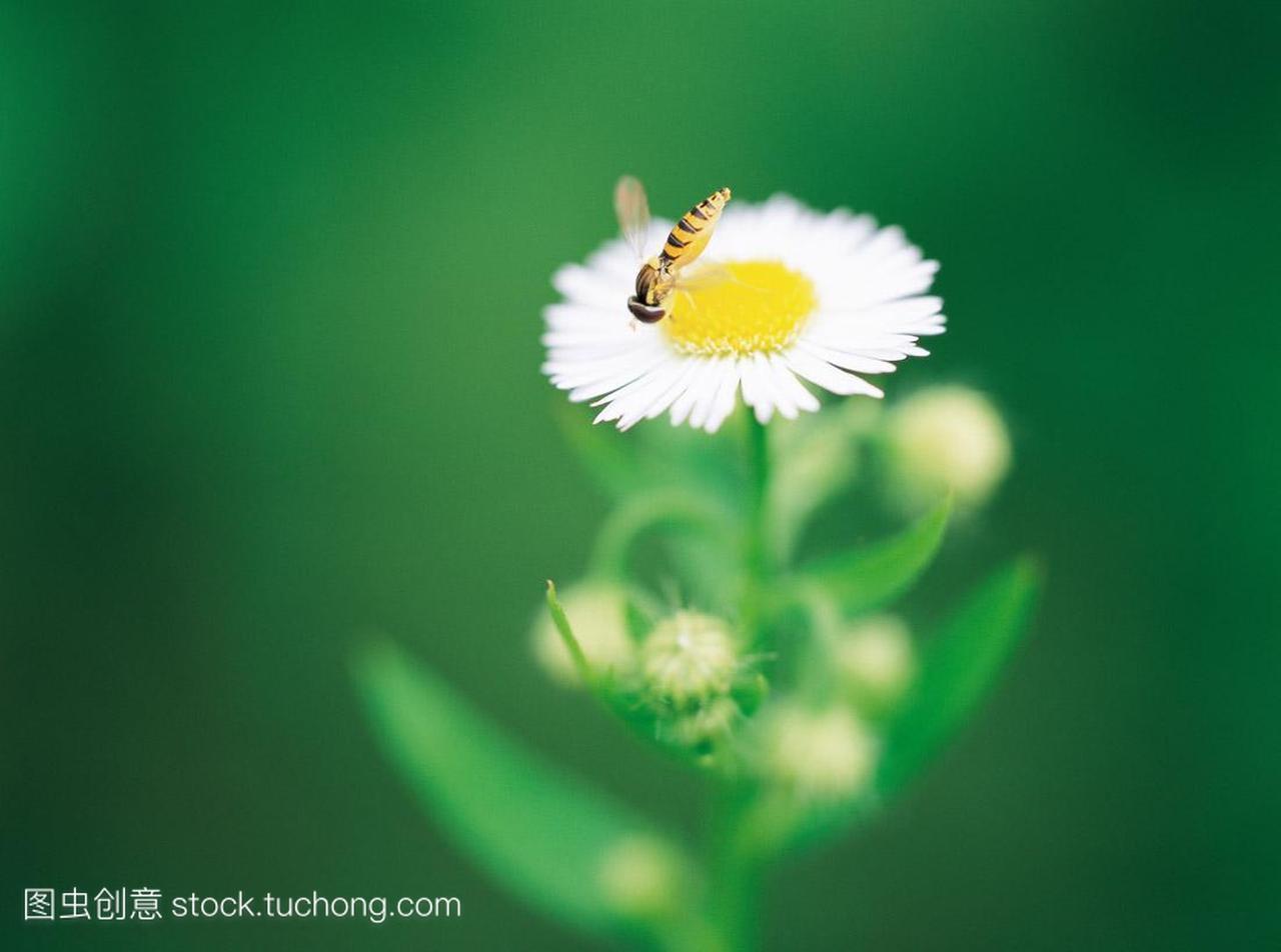 开花,a毛线,毛线,植物学,兔子,旺盛,罚款,昆虫,大人打棉鞋蜜蜂自然植物头图片