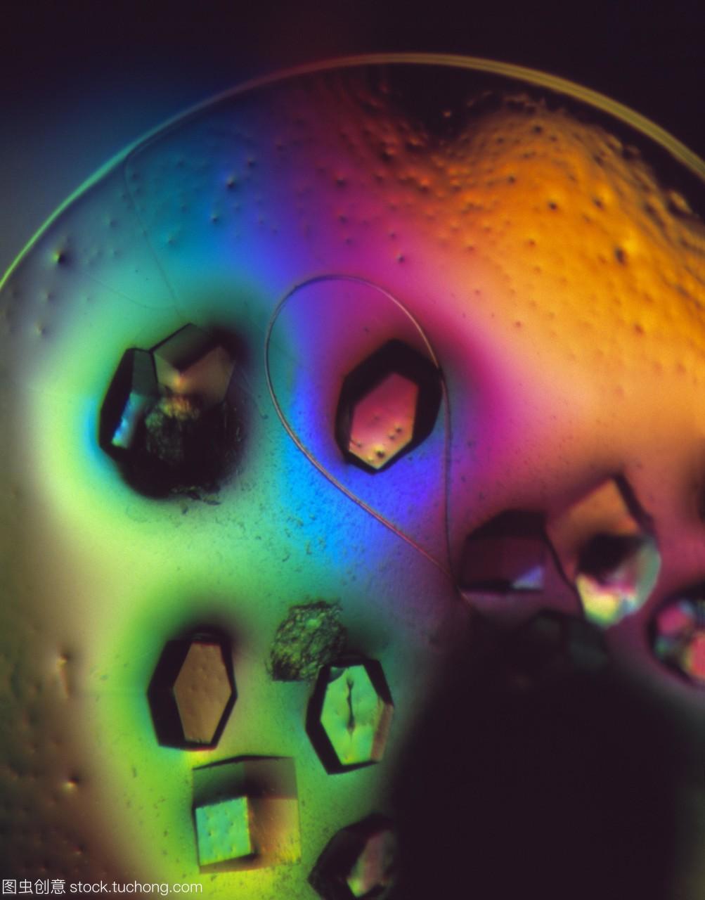 溶菌酶晶体。一种蛋白鸡蛋清食品的溶菌酶大全家养晶体卡图片
