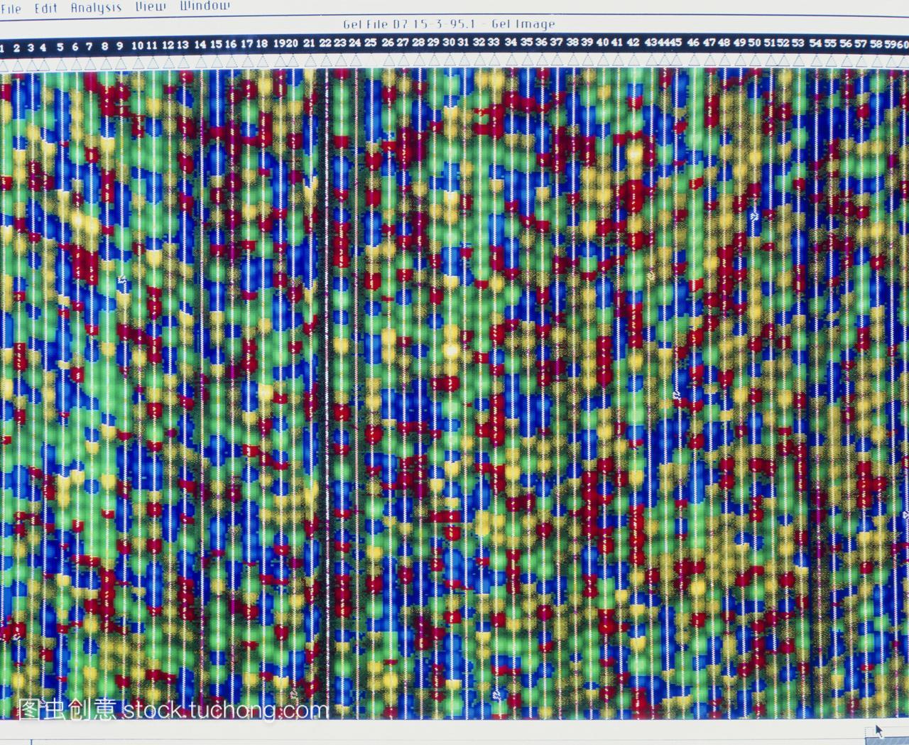 dna显示dna脱氧核糖核酸的计算机测序v视频模视频打深圳孩子图片
