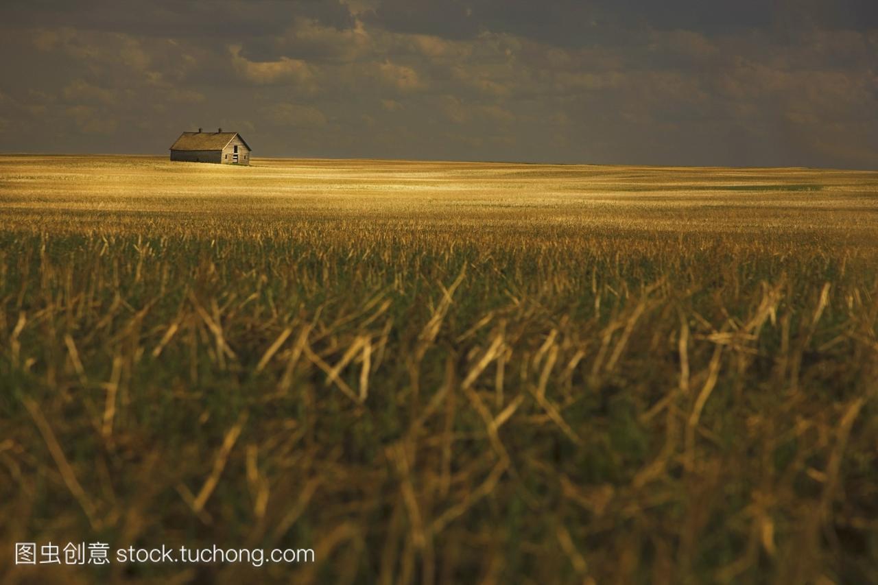 tofield阿尔伯塔加拿大;谷仓里的旧田野需求高中女生生理满足图片