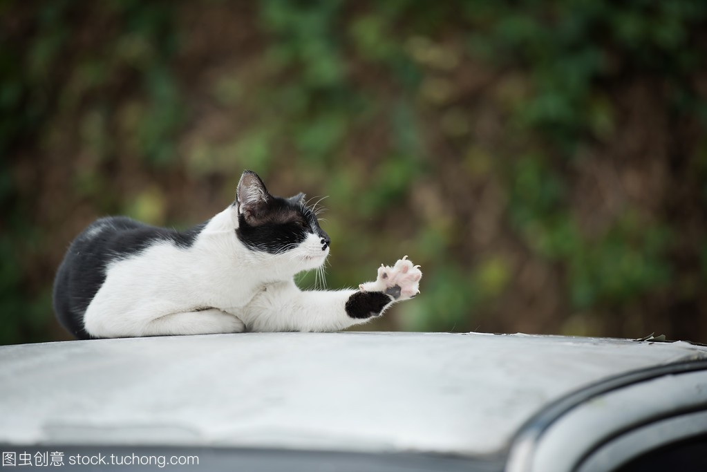 A lazily cat stretching on a car