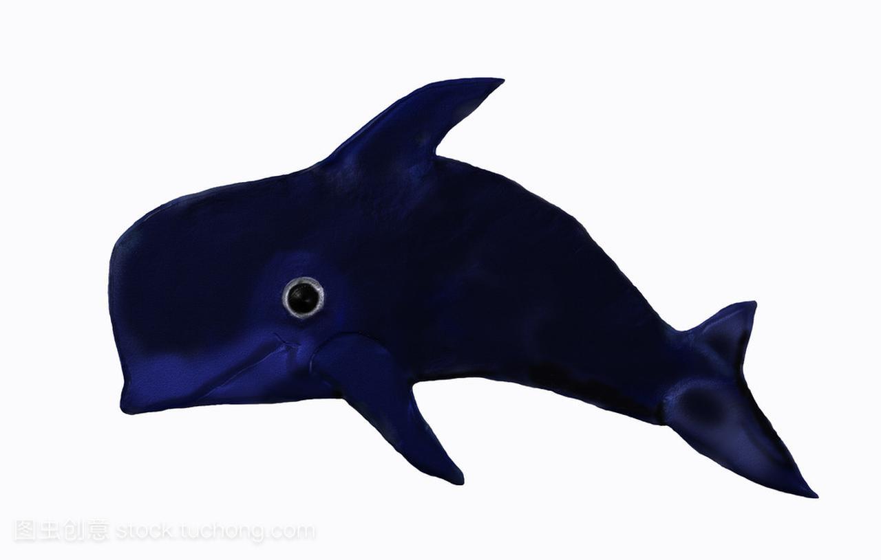 三亚领航鲸死亡是什么情况 什么是领航鲸?
