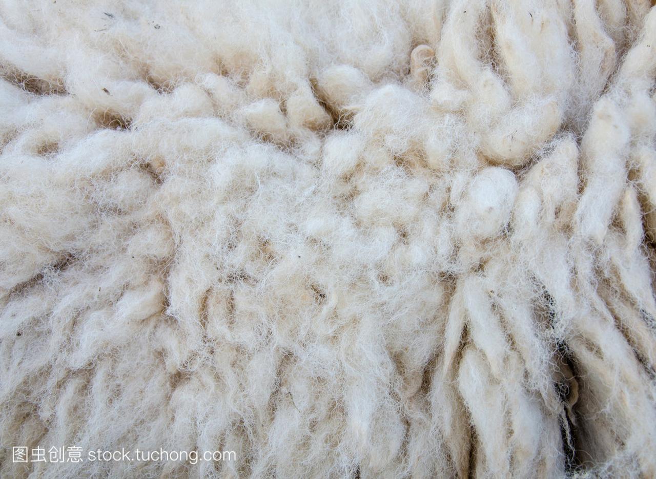 具绵状毛的绵羊羊毛为背景的