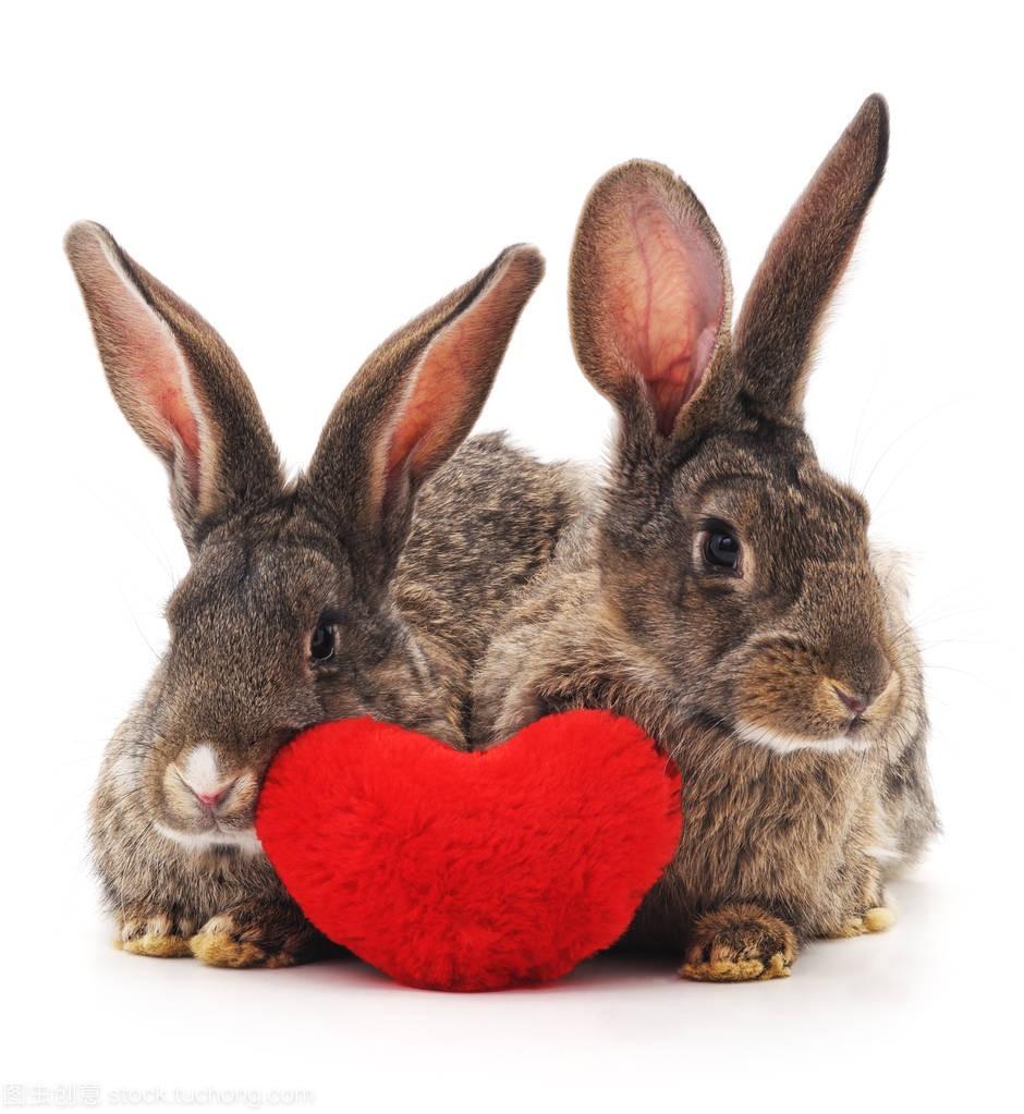 两只兔子和红色的心