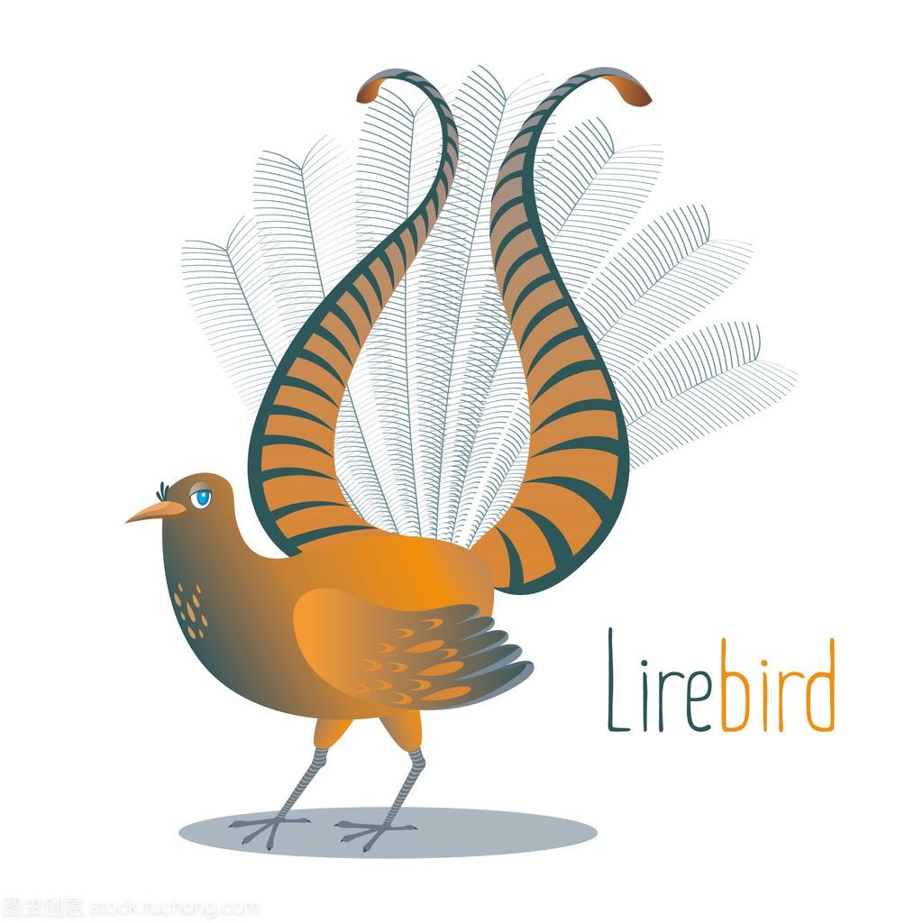 澳大利亚国鸟 Lyrebird 为求爱驳回尾巴在七弦