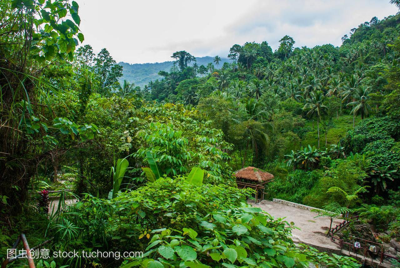 夏天的风景与棕榈树在夏季多云的天气,菲律宾