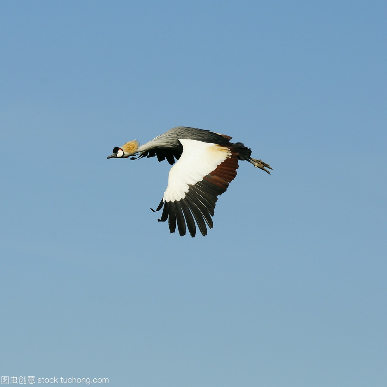 乌干达的国鸟