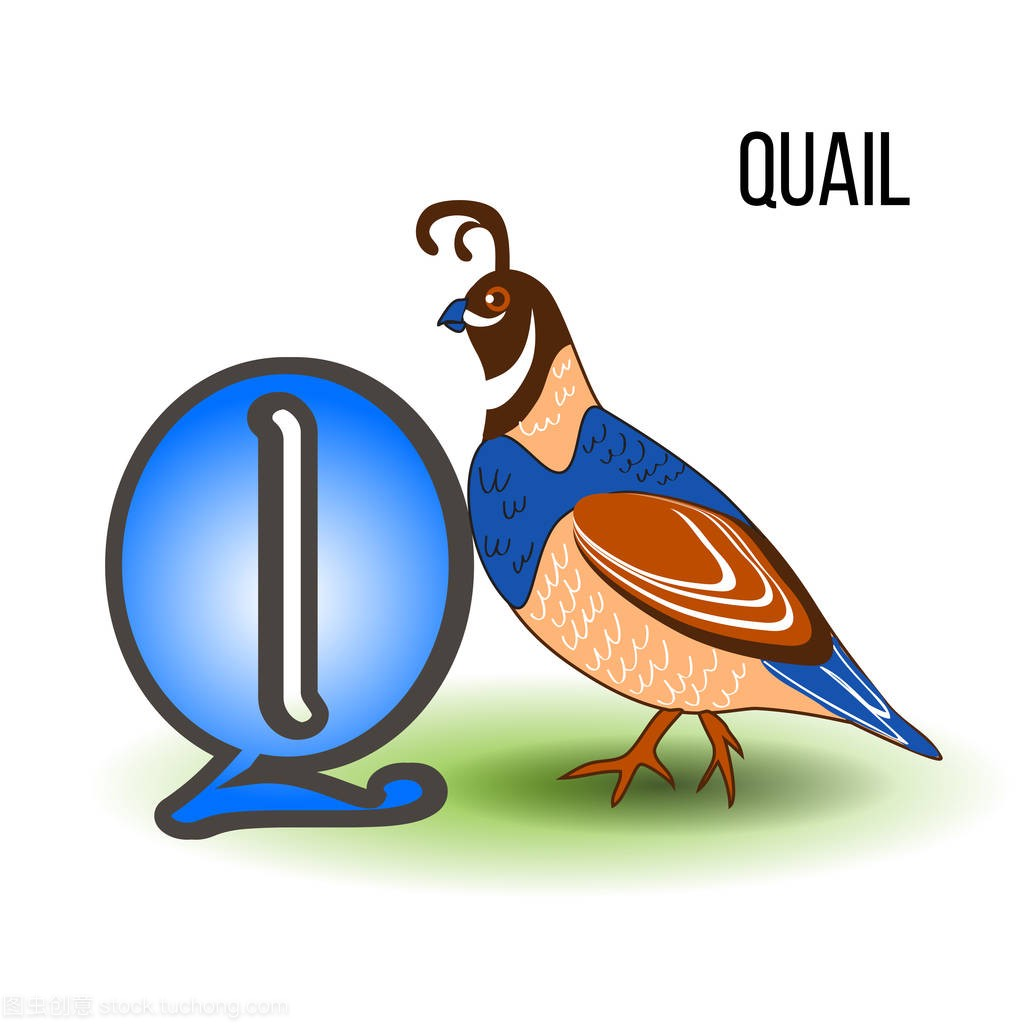 可爱动物园字母 Q 与卡通鹌鹑,鸟孩子动物矢量