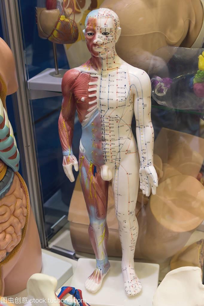 虚拟与图像内部的人体器官进行研究。医学、教