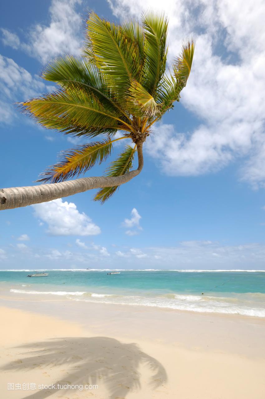 唯美,和平,吊,地平线,异国情调,多米尼加人,天,大