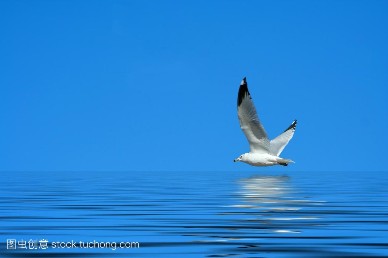动物,兽,大自然,动物主题,幼鸟,天空,海,小鸟,水域