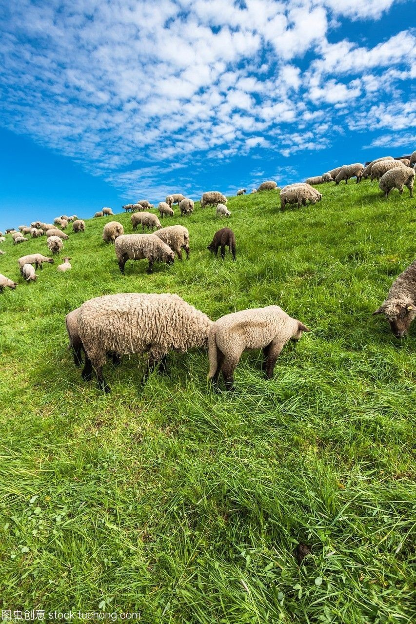 德国下萨克森州羊放牧和平欧洲