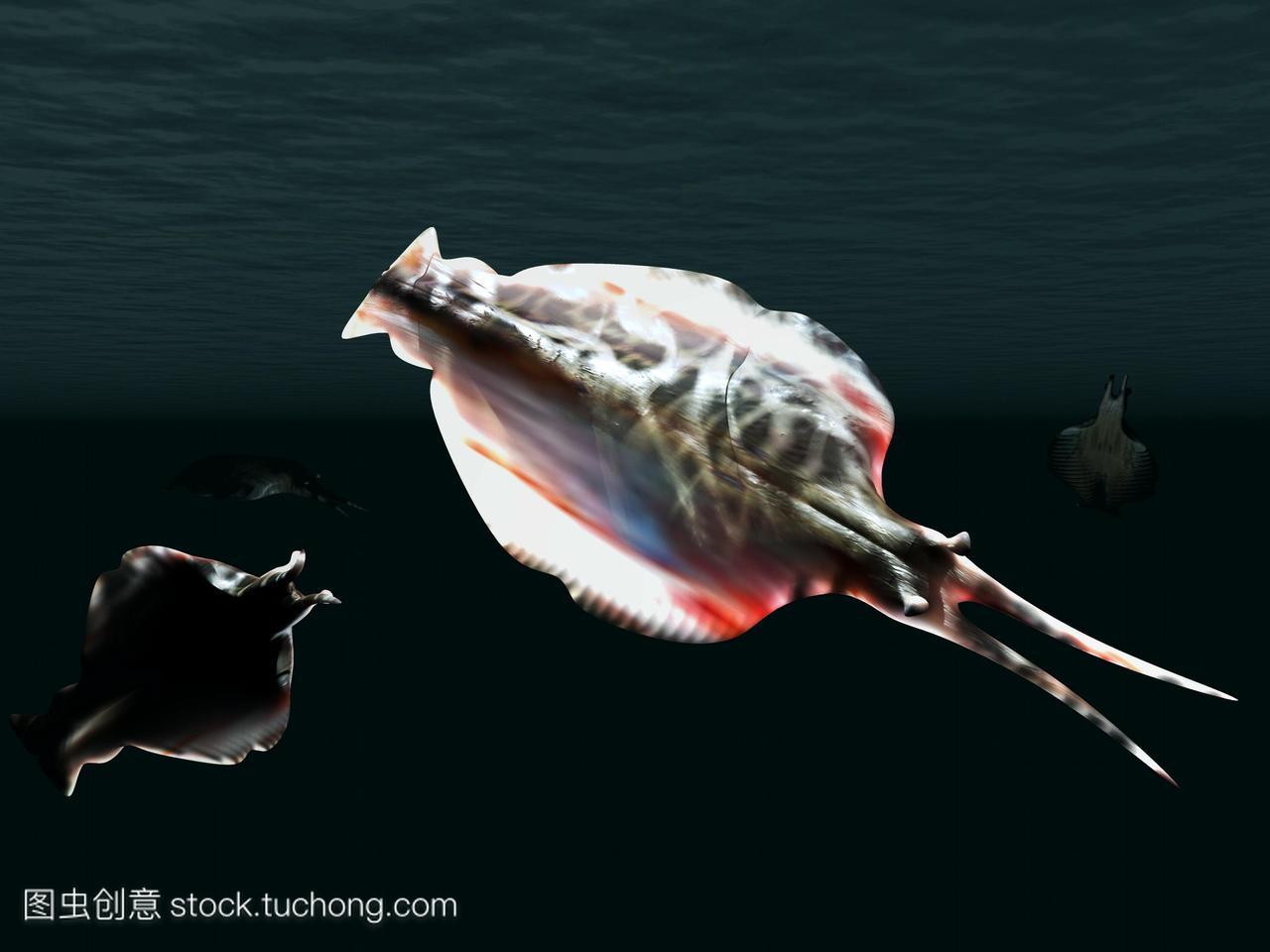 绘图Vetustovermis扁平无脊椎动物从寒武纪早