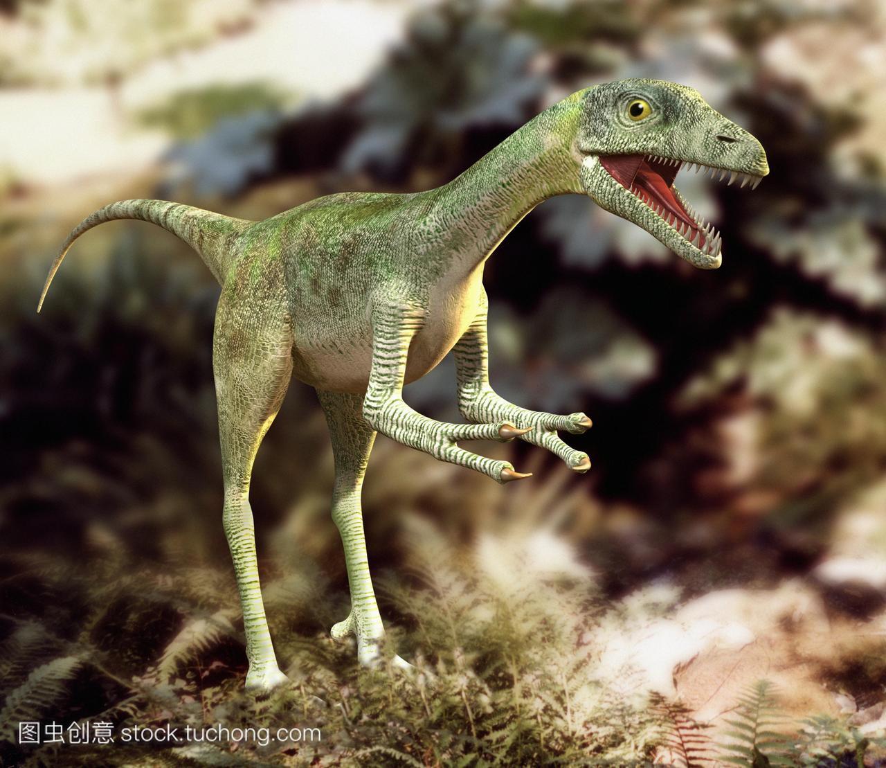 图两足恐龙秀颌龙sp。这是关于鸡的大小和生