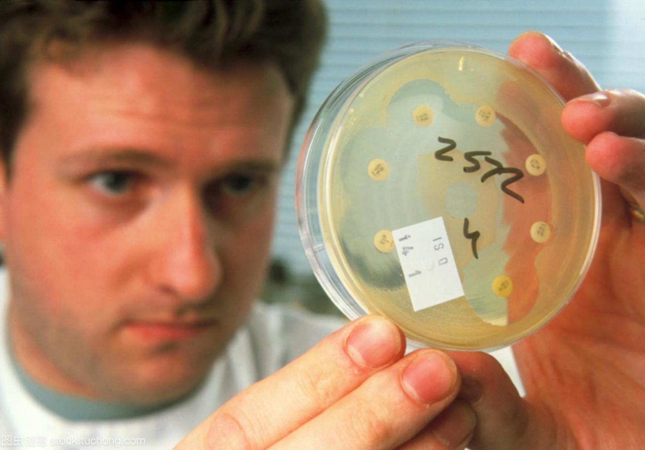 模型发布。细菌抗生素测试。男性技术人员正在