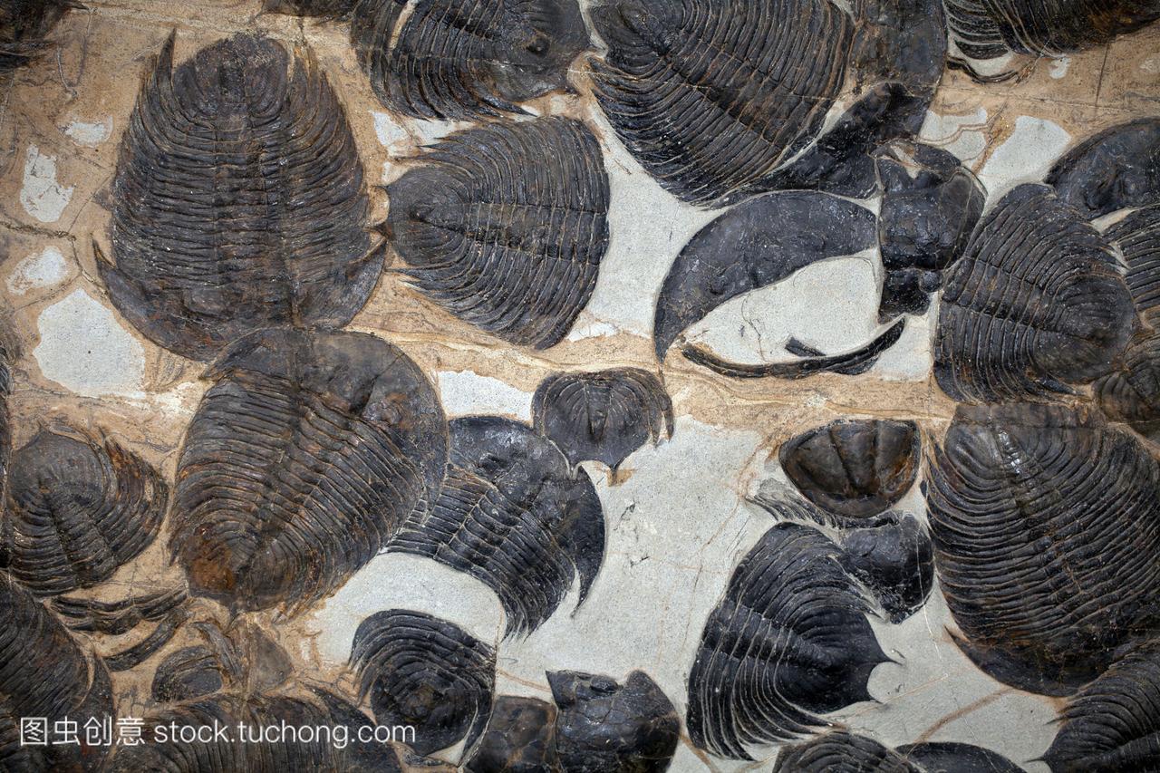 的硬壳,分割的节肢动物。它们生活在寒武纪和
