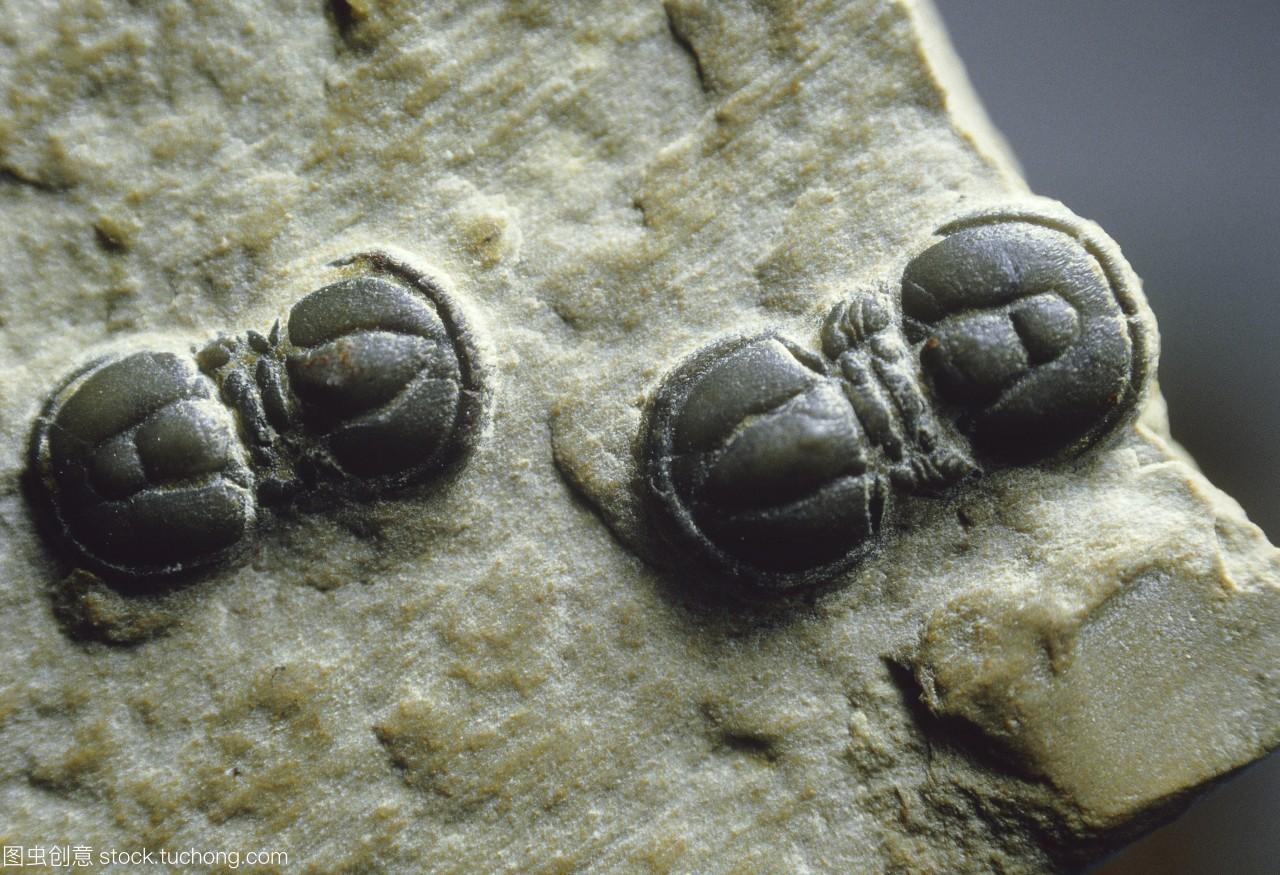 在寒武纪时期570至510米,一群灭绝的海生动物