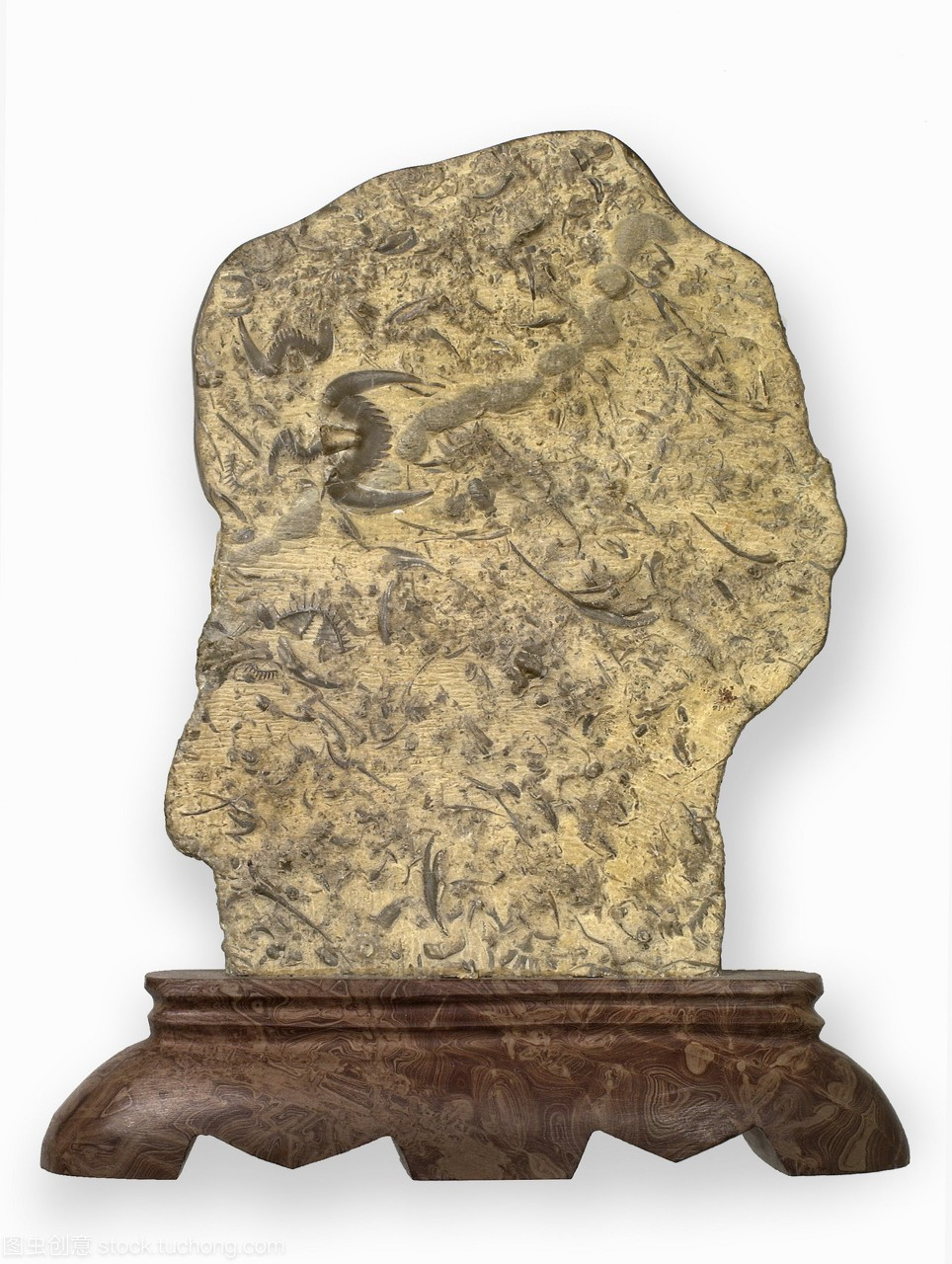 三叶虫化石安装板。这个板位于门将的会议室在